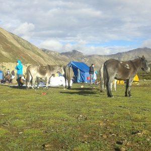 Camping Trek in Upper Dolpo, Dolma Tours