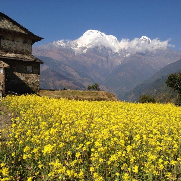 Bridim, Nepal